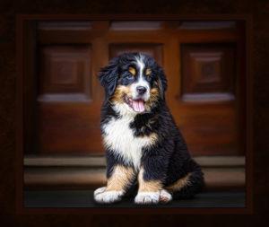 Huntsville Al pet photographer dog pictures